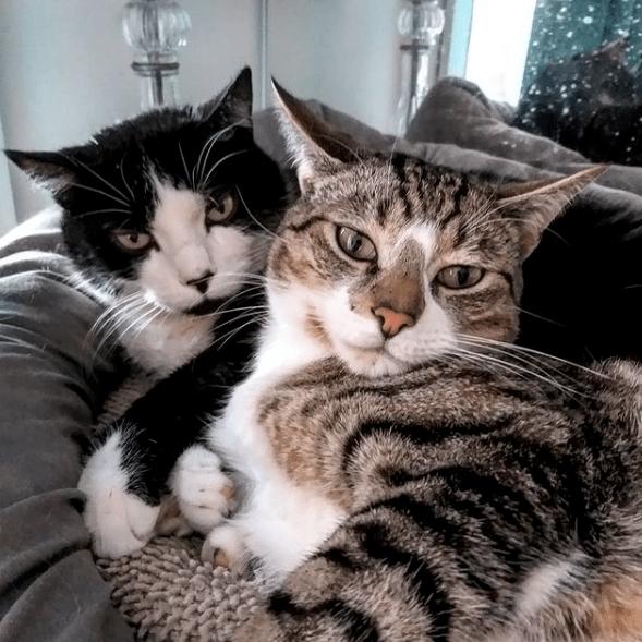 Les chats de Paris