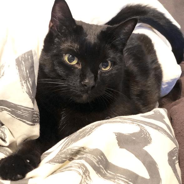 Schwarze Katzen – faszinierende Fakten