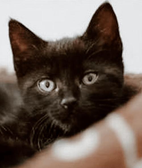 Pupsi Adoption Story